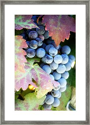 Grapes Of Wrath Framed Print by WALL Photography and Design