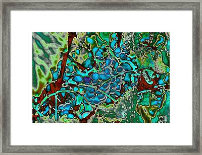 Grapes On The Vine Framed Print by David Patterson