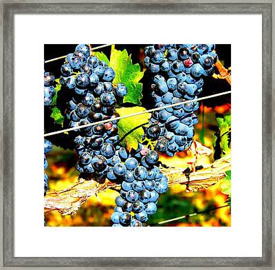 Grapes On The Vine Framed Print