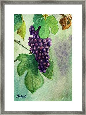 Grapes On The Vine Framed Print by Prashant Shah