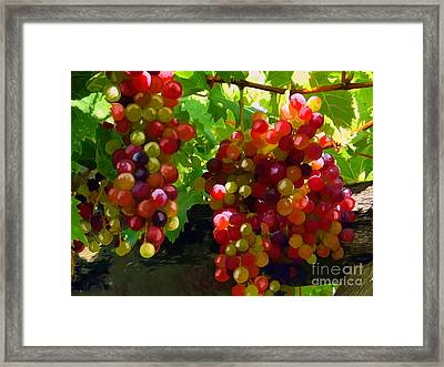 Grapes On The Vine Framed Print by Tim Gilliland