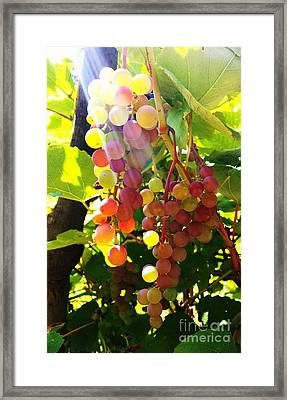Framed Print featuring the photograph Grapes  by Rose Wang