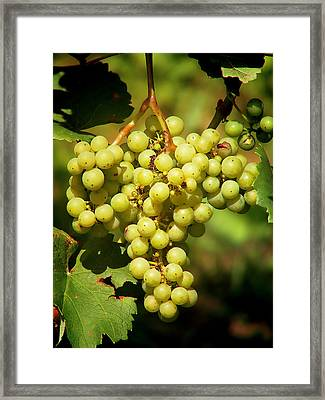 Grapes - Yummy And Healthy Framed Print