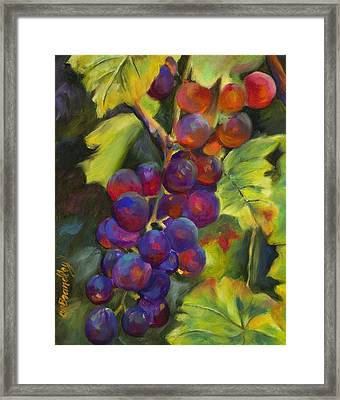 Grapevine Framed Print by Chris Brandley