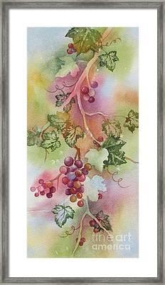 Grapevine Framed Print by Deborah Ronglien