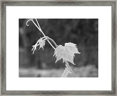 Grapevine  Framed Print by Heather L Wright
