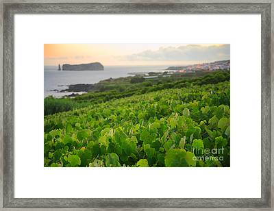 Grapevines And Islet Framed Print by Gaspar Avila