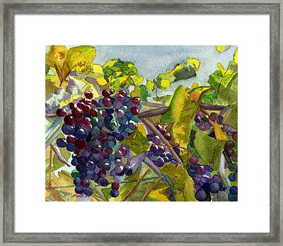Framed Print featuring the painting Grapevines by Lynne Reichhart