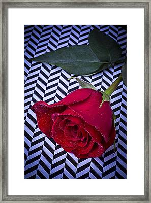 Graphic Rose Framed Print by Garry Gay