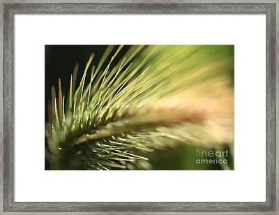 Grass 1 Framed Print by Rebeka Dove