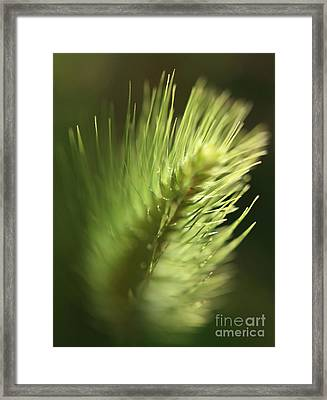 Framed Print featuring the photograph Grass 2 by Rebeka Dove