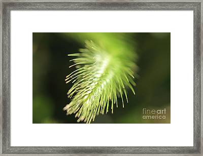 Framed Print featuring the photograph Grass 3 by Rebeka Dove