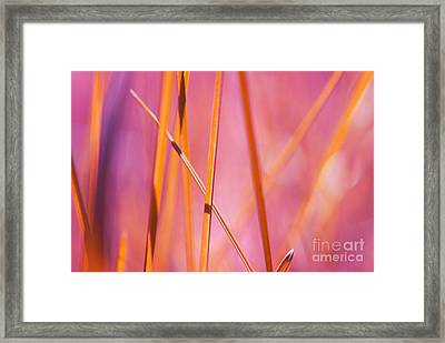 Grass Abstract - 03439 Framed Print by Variance Collections