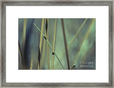 Grass Abstract - 03439gr Framed Print