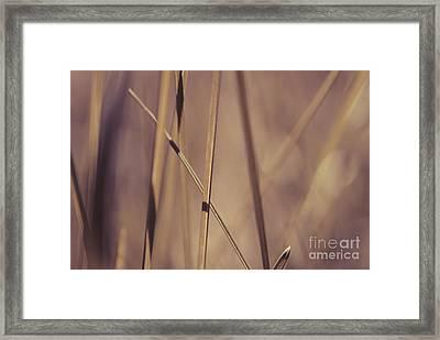 Grass Abstract - Bruni 01 Framed Print