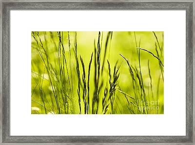 Grass Abstract Framed Print by Svetlana Sewell