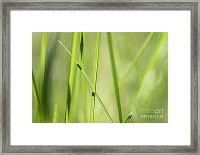 Grass Abstract - Woodie- Green 01 Framed Print