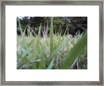 Grass Blades Framed Print