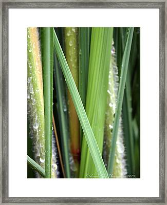 Framed Print featuring the photograph Grass Blades Morning Dew by Deborah Fay