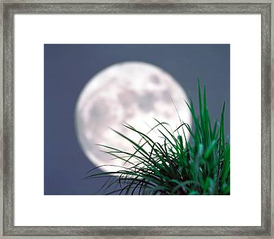 Grass Blades With Full Moon Framed Print by Panoramic Images