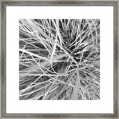 Grass Framed Print by Christy Beckwith