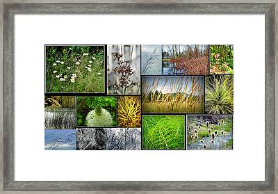 Grass Collage Variety Framed Print