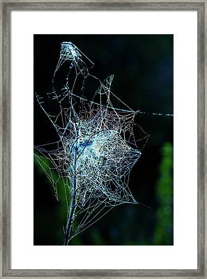 Grass Covered With Spider's Web Framed Print by Wladimir Bulgar
