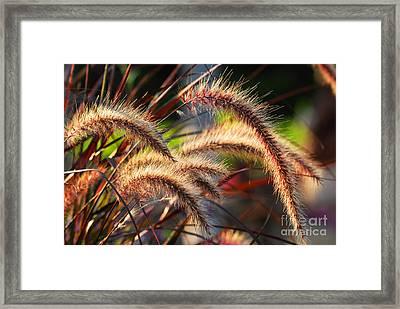 Grass Ears Framed Print