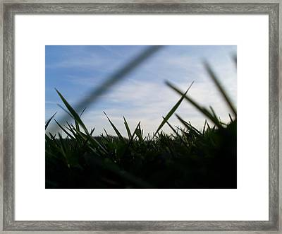 Grass-eye-view Framed Print by Kiara Reynolds