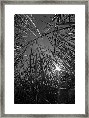 Grass Forest Framed Print by Luca Diana