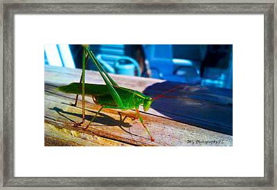 Framed Print featuring the photograph Grass Hopper by Marty Gayler