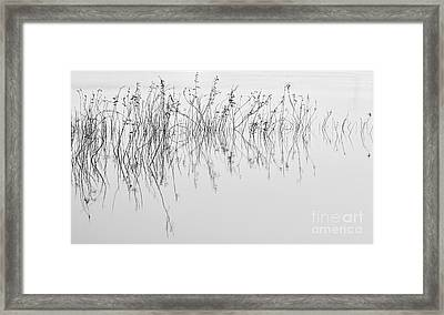 Grass In Lake Framed Print