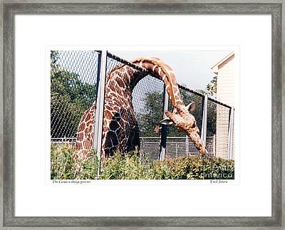 Grass Is Always Greener. Framed Print
