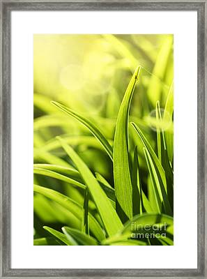 Grass Macro Framed Print