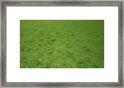 Grass Meadow, Artwork Framed Print by Leonello Calvetti