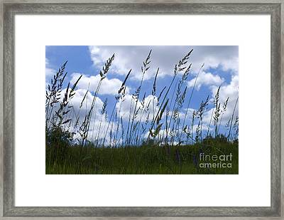 Grass Meets Sky Framed Print