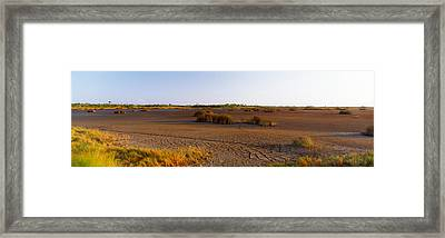 Grass On A Dry Land, Black Point Framed Print