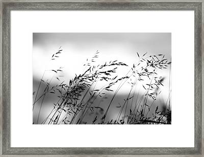 Framed Print featuring the photograph Grass On Mount Iwaki by Brad Brizek