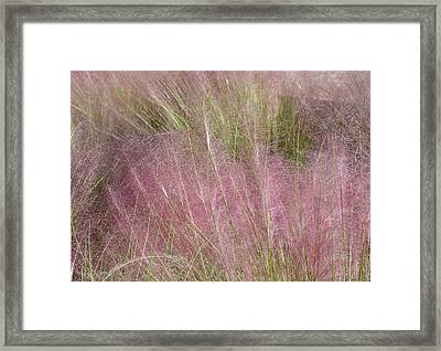 Grass Photography - Soft - By Sharon Cummings Framed Print