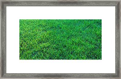 Grass Sacramento Ca Usa Framed Print