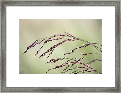 Grass Seed Framed Print