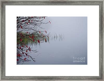 Grass Framed Print by Stephanie Emond