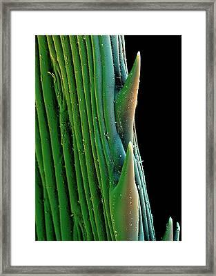 Grass Trichomes Framed Print by Stefan Diller