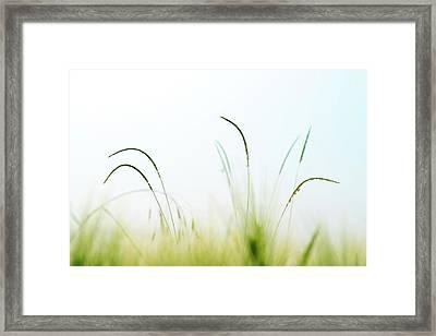 Grass Framed Print by Wladimir Bulgar/science Photo Library