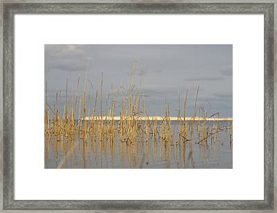 Grass Work Framed Print by Eugene Bergeron
