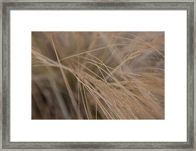 Grasse Framed Print by Samuel Schroder