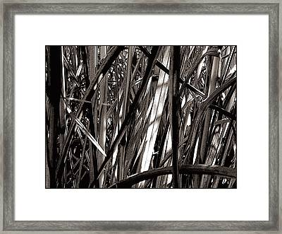 Grasses 2 Framed Print by Colleen Cannon