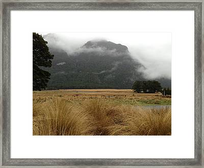 Grasses And Mist Framed Print by Ron Torborg