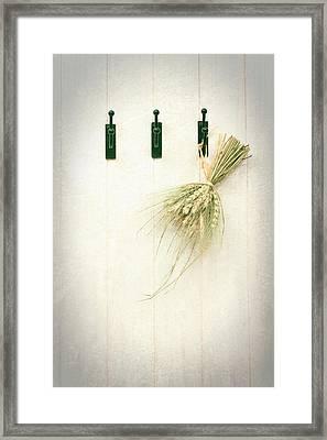Grasses Framed Print by Amanda Elwell