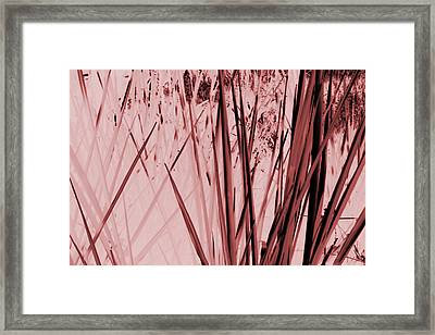 Grasses Framed Print by Colleen Cannon